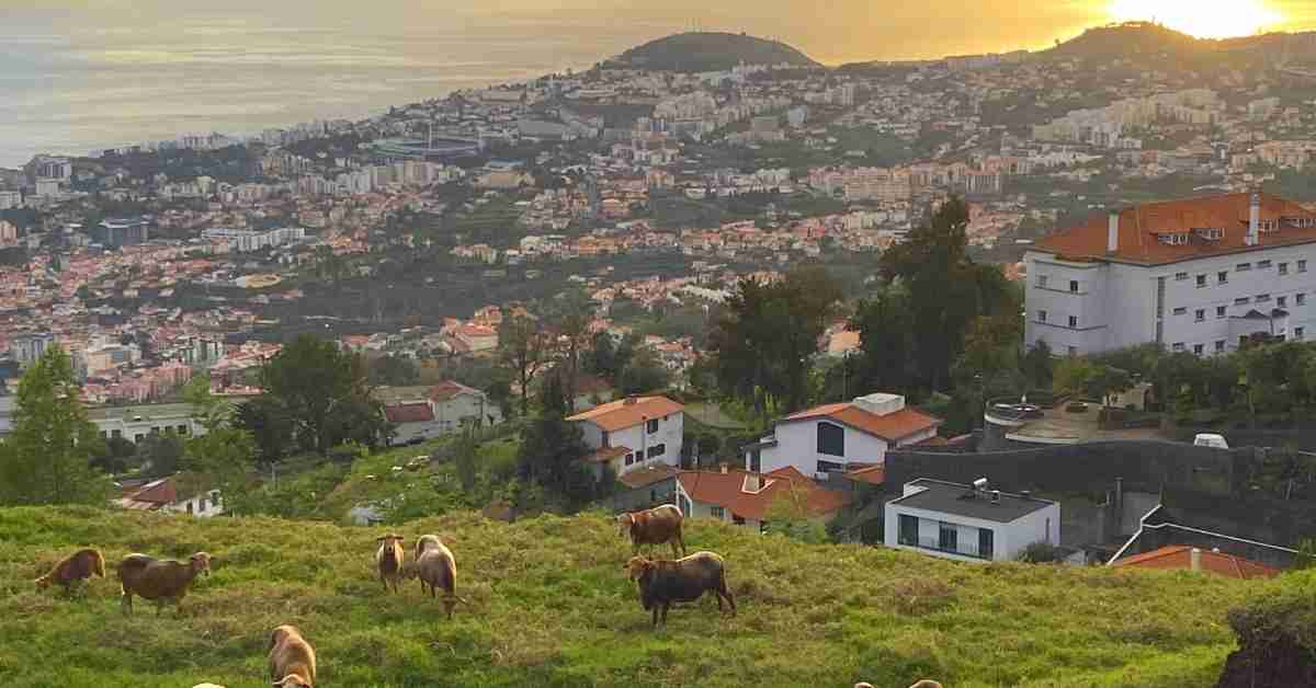 living in madeira view
